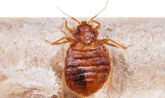 Terminix 174 Powerful Pest Amp Termite Solutions Defenders