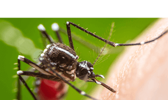 Terminix® - Powerful Pest & Termite Solutions   Defenders of Home